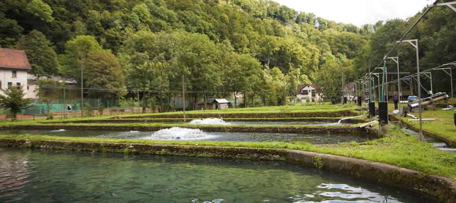 forellenhof-roessle-fischzucht.jpg